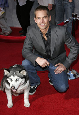 Actor Paul Walker with his Siberian Husky co-star at the movie premiere of Eight Below.