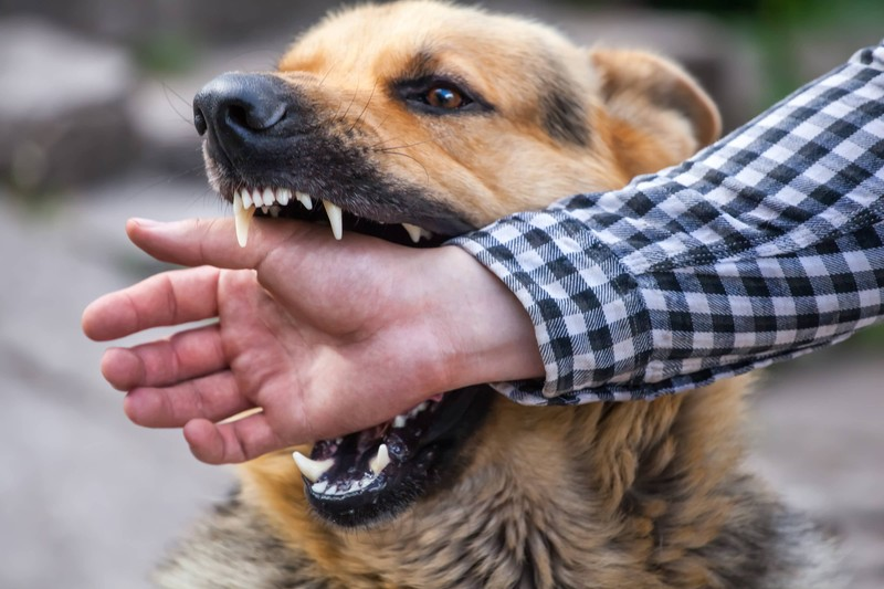 California is Number One in the Nation When it Comes to Dog-Related Injury Claims